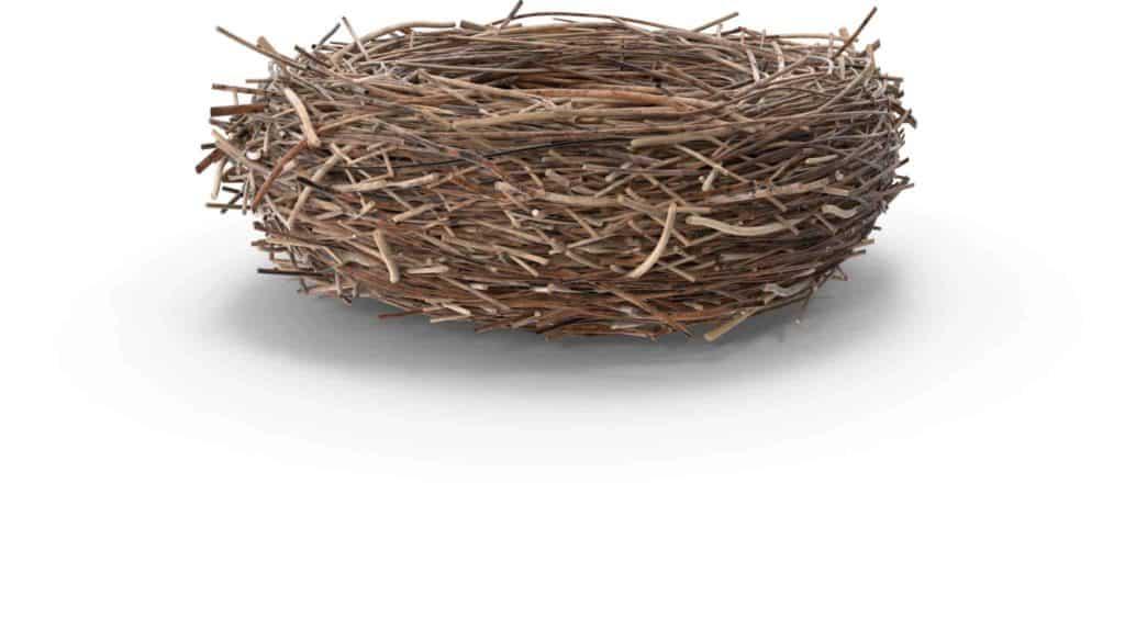 Unsere WordPress Nestpflege
